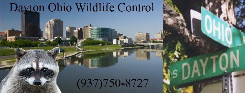wildlife control dayton ohio