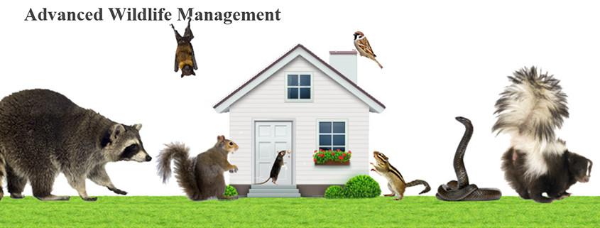 Dayton Wildlife Control