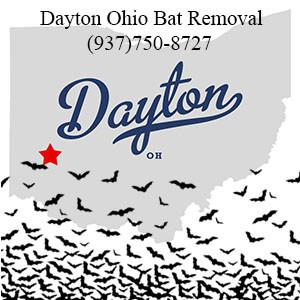 Dayton Ohio bat removal