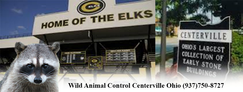 centerville ohio wildlife control
