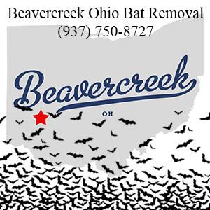 Beavercreek Ohio Bat Removal