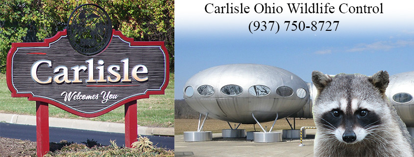 Carlisle Ohio wildlife control