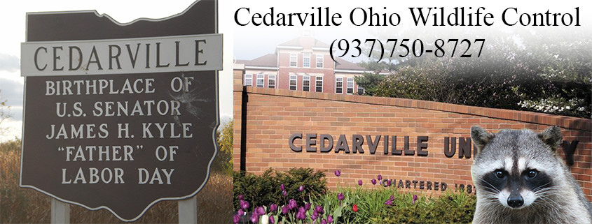 Cedarville ohio wildlife control
