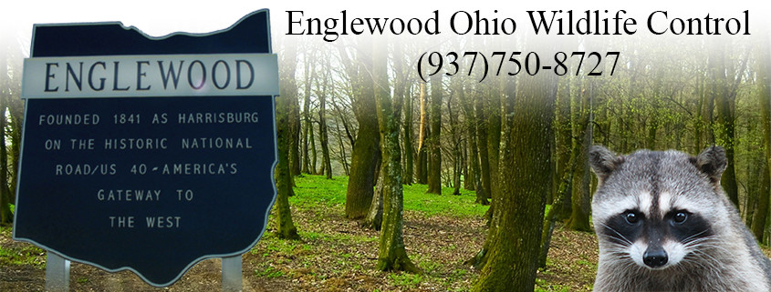 Englewood ohio wildlife control