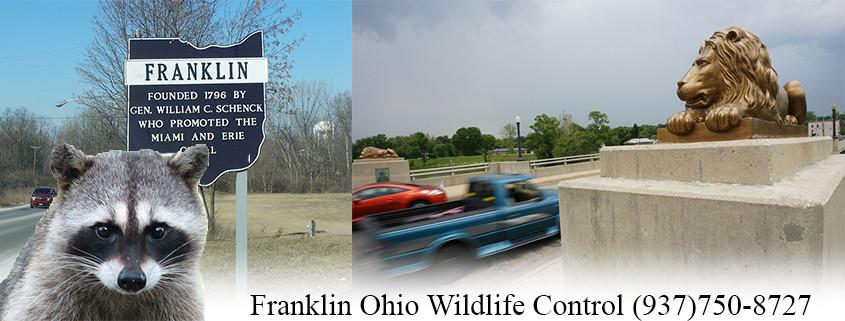 Franklin Ohio wildlife control