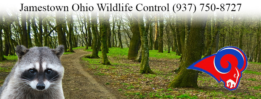 Jamestown ohio wildlife control