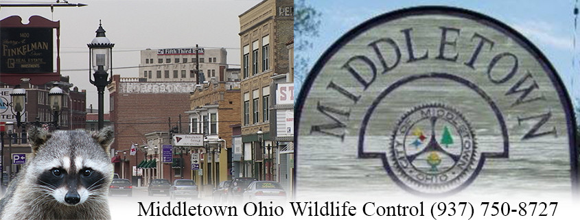 Middletown Ohio wildlife Control