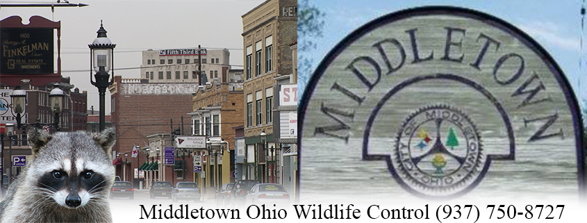 1315 Elliott Dr, Middletown, OH, 45044 - Fast Food ...  |Arbys Middletown Ohio