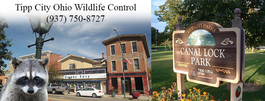 Tipp City Ohio wildlife control