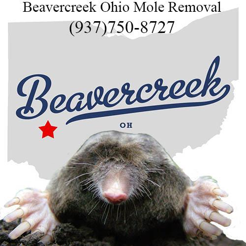 Beavercreek mole removal