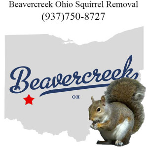beavercreek squirrel removal