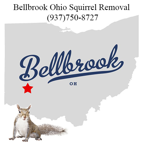 Bellbrook Squirrel Removal