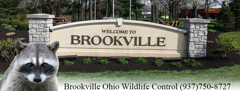 Brookville Ohio wildlife control