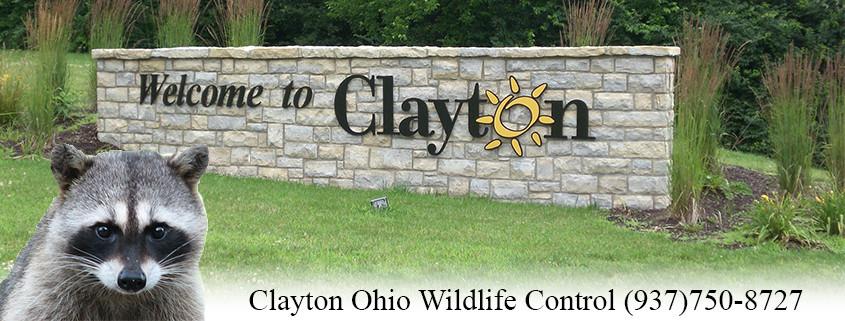 clayton ohio wildlife control