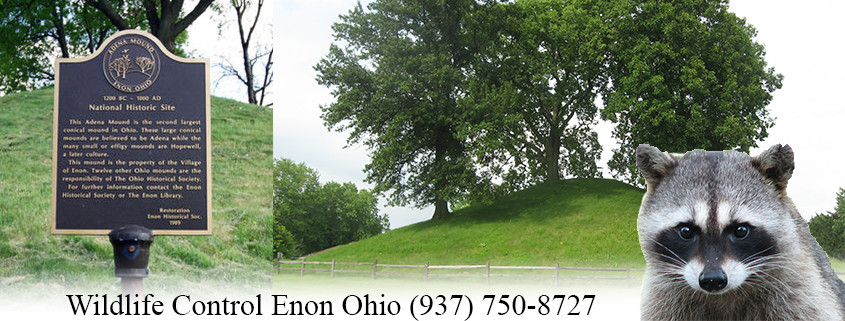 enon ohio wildlife control