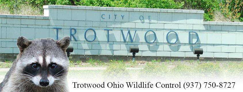 trotwood ohio wildlife control