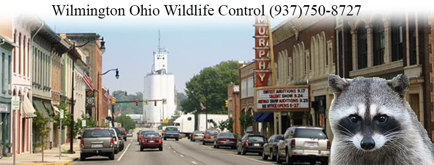 wilmington ohio wildlife control