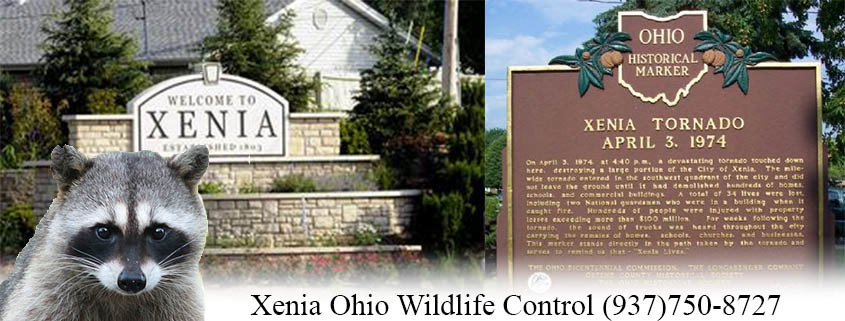 Xenia ohio wildlife control