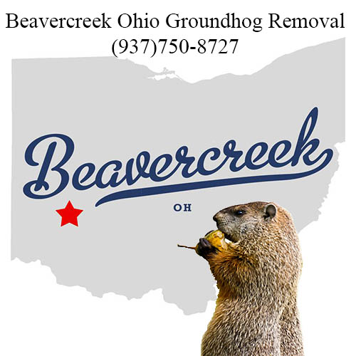 beavercreek groundhog removal