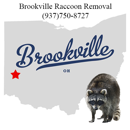 Brookville Raccoon Removal