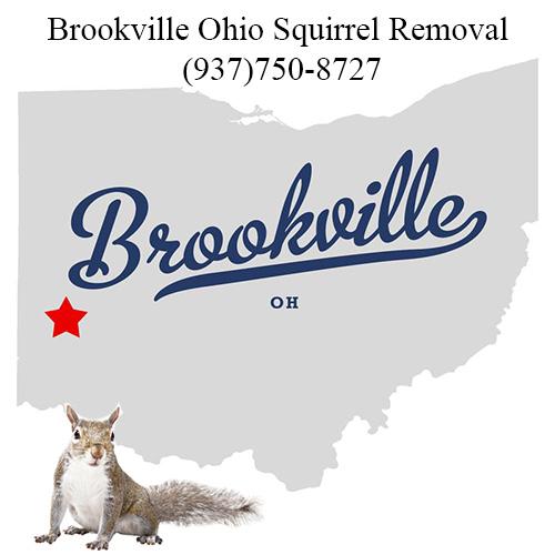 Brookville Ohio Squirrel Removal