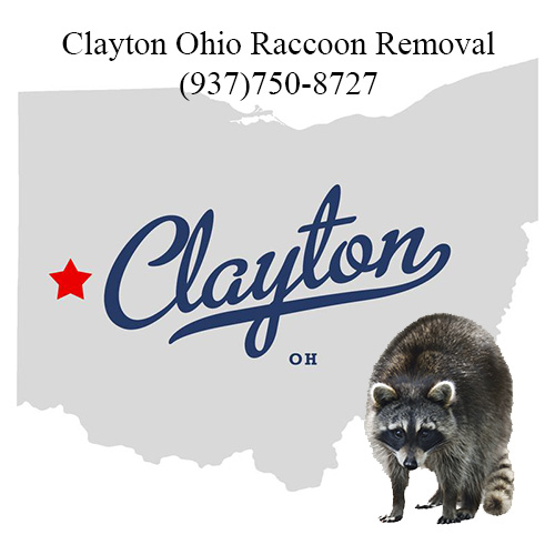 Clayton Ohio Raccoon Removal