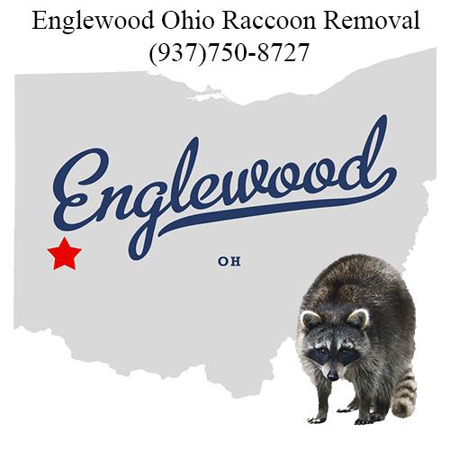 Englewood Raccoon Removal