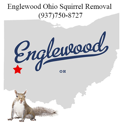 Englewood Ohio Squirrel Removal