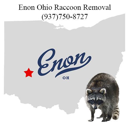 Enon Ohio Raccoon Removal