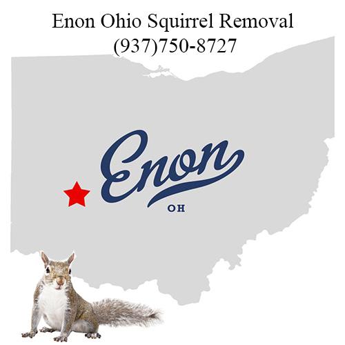 Enon Ohio Squirrel Removal