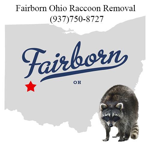 Fairborn Ohio Raccoon Removal