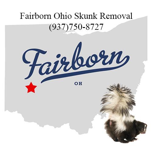 fairborn ohio skunk removal