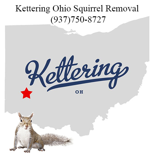 Kettering Ohio Squirrel Removal