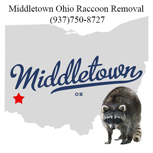 Middletwon Ohio Raccoon Removal