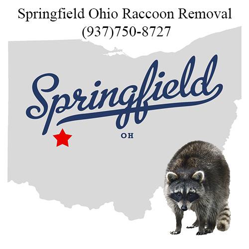 Springfield Ohio Raccoon Removal