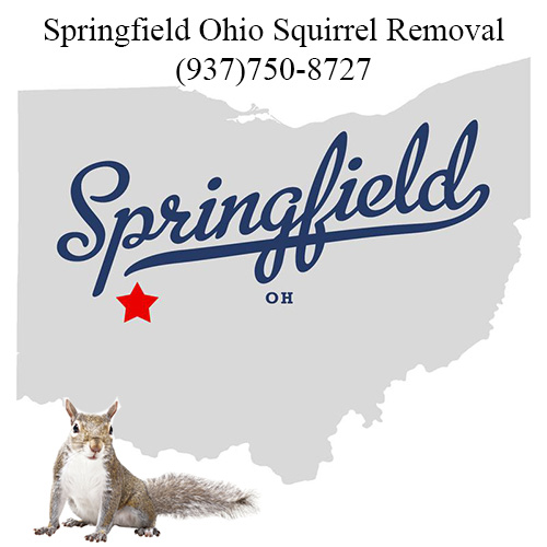Springfield Ohio Squirrel Removal