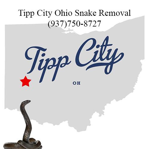 tipp city ohio snake removal