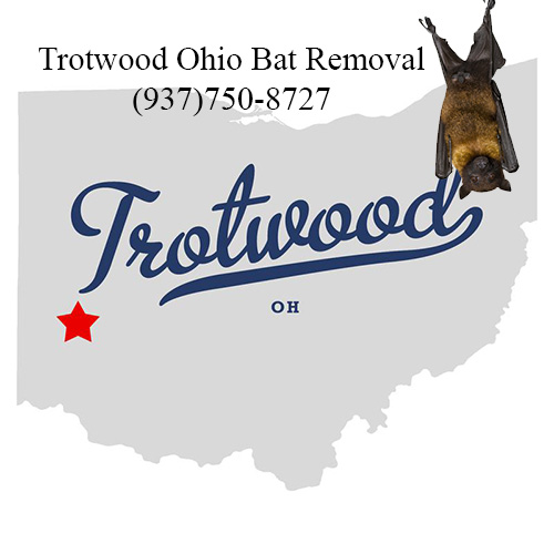 trotwood ohio bat removal