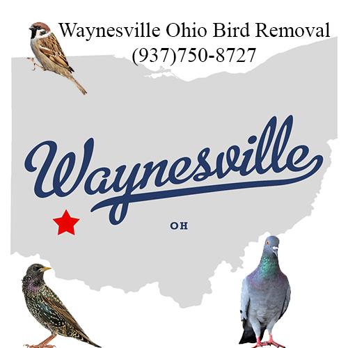 waynesville ohio bird removal