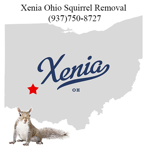 Xenia Ohio Squirrel Removal