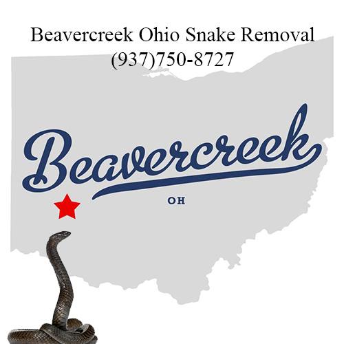 beavercreel ohio snake removal