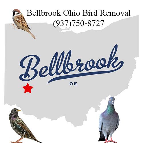 bellbrook ohio bird removal