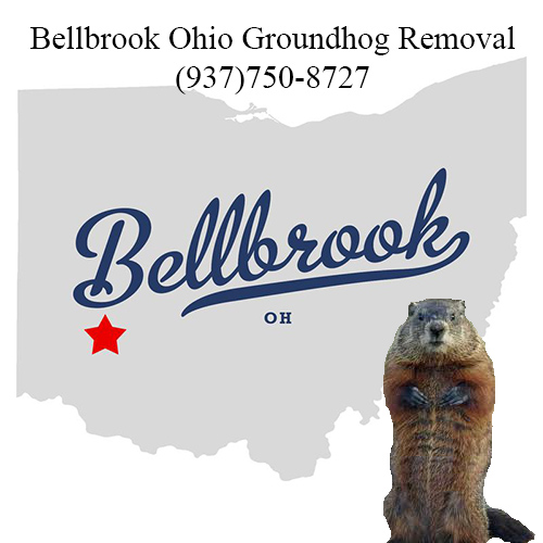 bellbrook ohio groundhog removal