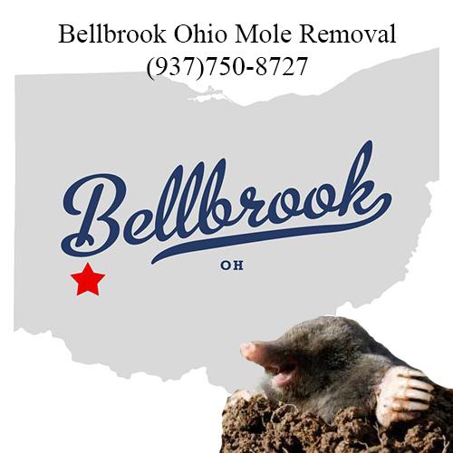 bellbrook ohio mole removal