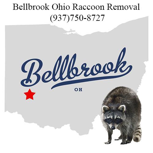 Bellbrook Raccoon Removal