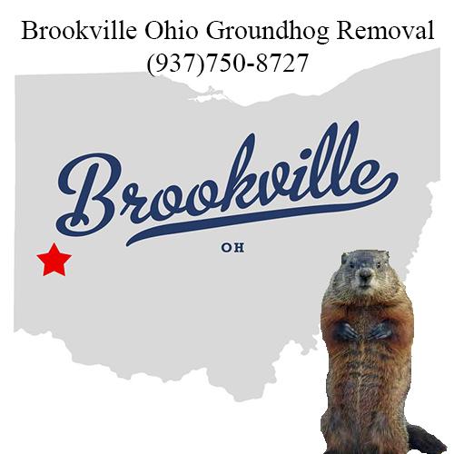 brookville ohio groundhog removal
