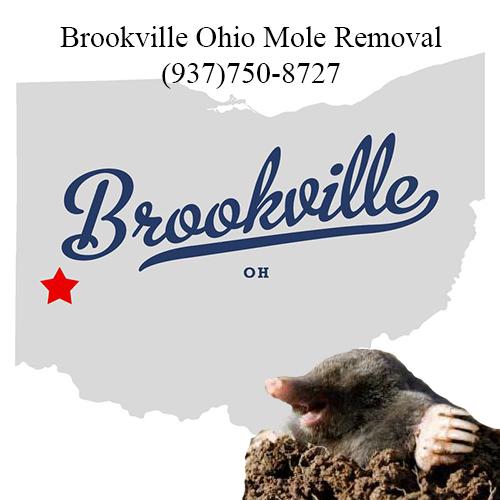 brookville ohio mole removal