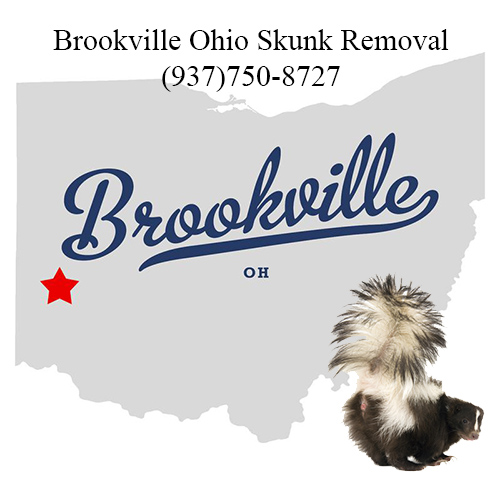 brookville skunk removal ohio
