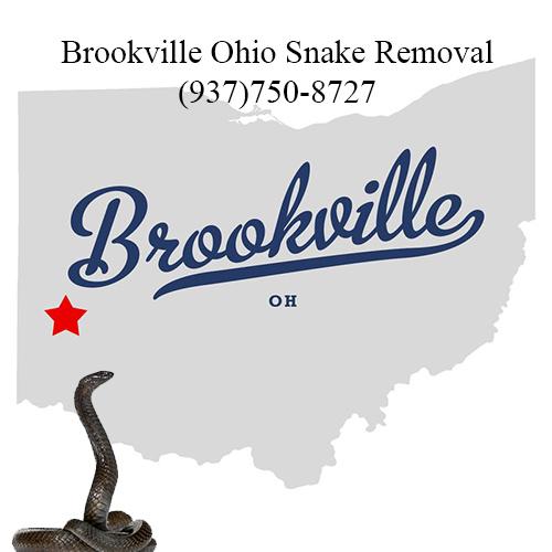 brookville ohio snake removal