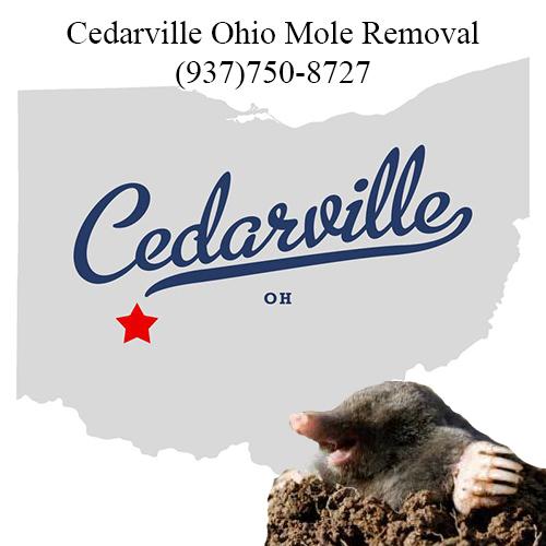 cedarville ohio mole removal